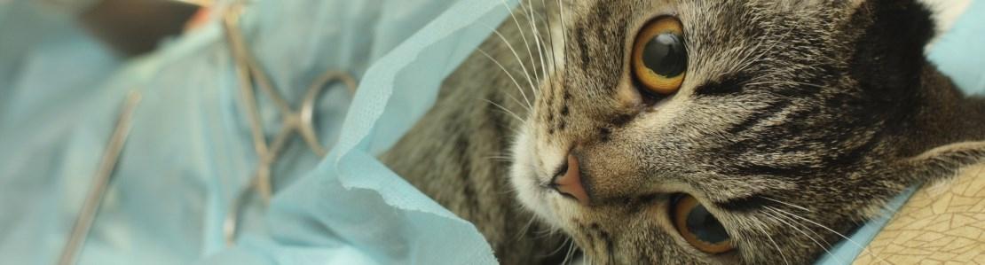 Weke delen chirurgie kat: het gastro-intestinale systeem - Editie 4